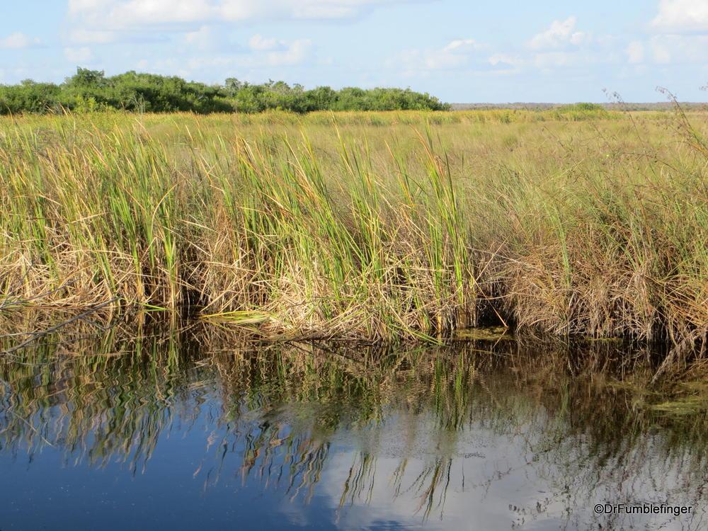 """The """"River of Grass"""".  Florida's Everglades"""