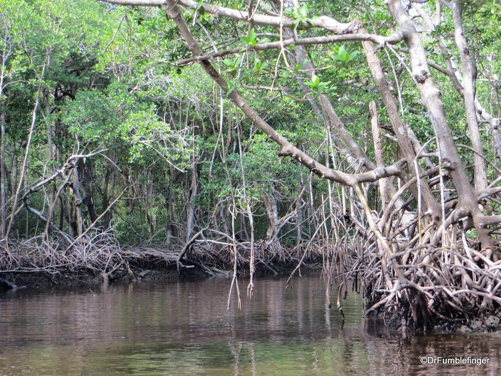 Coastal Mangroves, Florida's Everglades