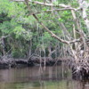 Coastal Mangroves, Florida's Everglades