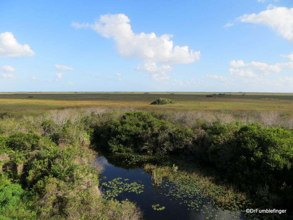 Last pic of the Everglades!  Take from the observation tower in Shark Valley