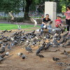 Buenos Aires  -- family feeding the pigeons in a park