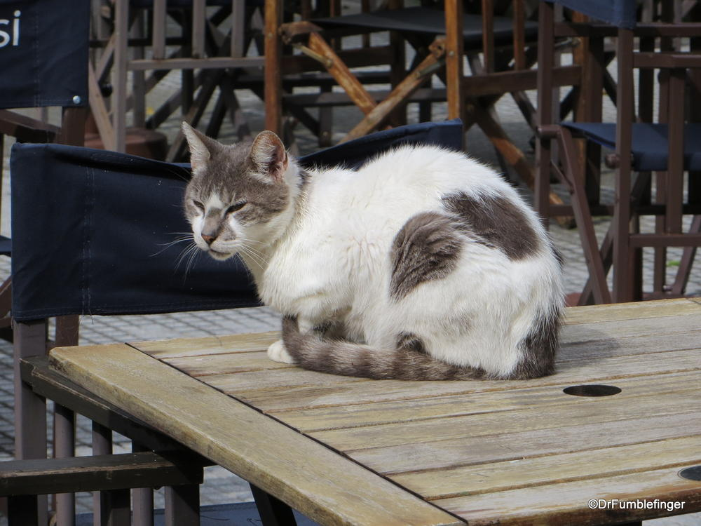 Feral cat, Buenos Aires.  Sitting on a cafe table in Recoleta