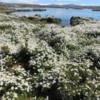 El Calafate, Argentina.  Laguna Nimez Nature Reserve hike