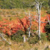Some brilliantly colored lichen seen on our hike in Tierra Del Fuego, Chile.  This lichen is thousands of years old