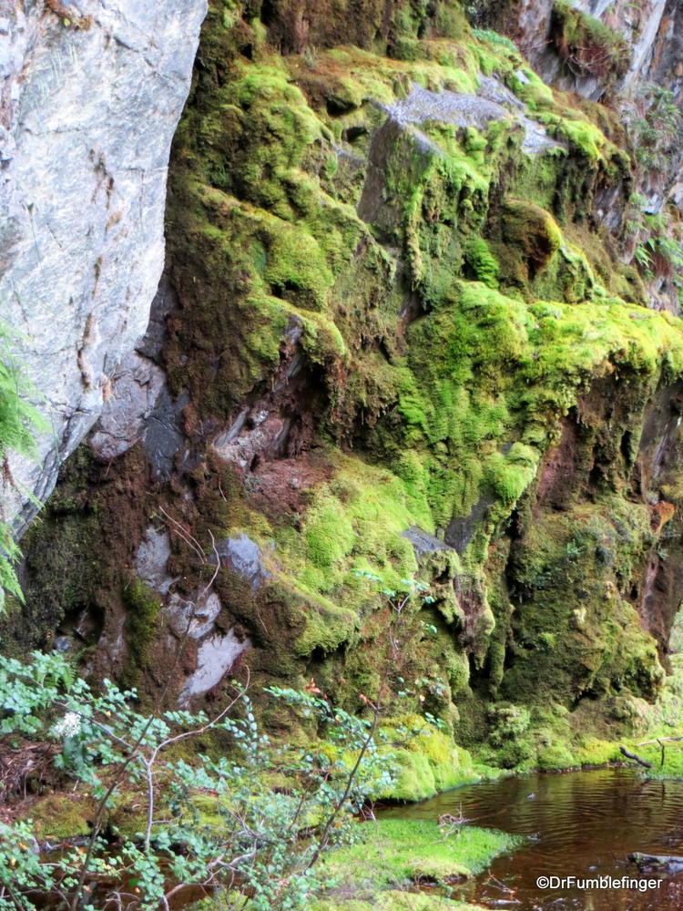 A wet, mossy place seen on our hike in Tierra Del Fuego, Chile