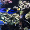 Tropical Reef display, Monterey Bay Aquarium