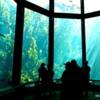 Kelp Forest, Monterey Bay Aquarium