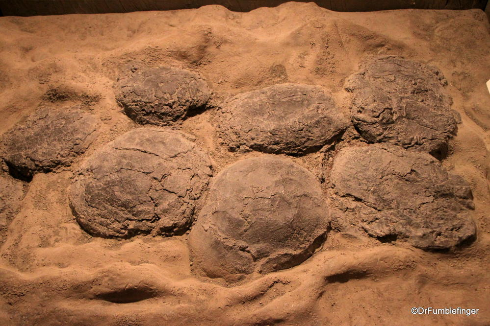 Fossilized nest of duckbill dinosaur eggs, Devil's Coulee Dinosaur Heritage Museum, Warner, Alberta