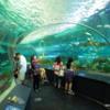 Dangerous Lagoon, Ripley's Aquarium of Canada, Toronto