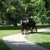 Horse carriage, Butterfly conservatory, Niagara Falls