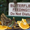 Butterfly conservatory, Niagara Falls