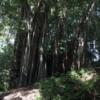 Wahiawa Botanical Garden