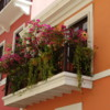 Flowery Balcony in Old San Juan