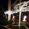 Christmas lit trees and torches at the Coeur d'Alene Resort
