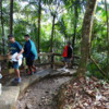 On the Big Tree trail in El Yunque National Forest