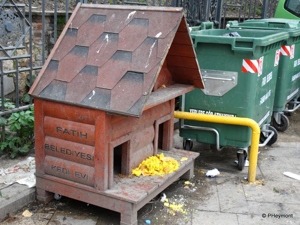 Municipal Cathouse