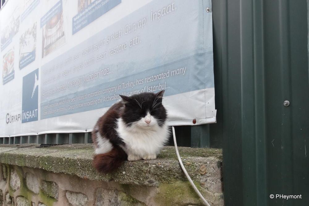Top Cat? No, Topkapi Cat