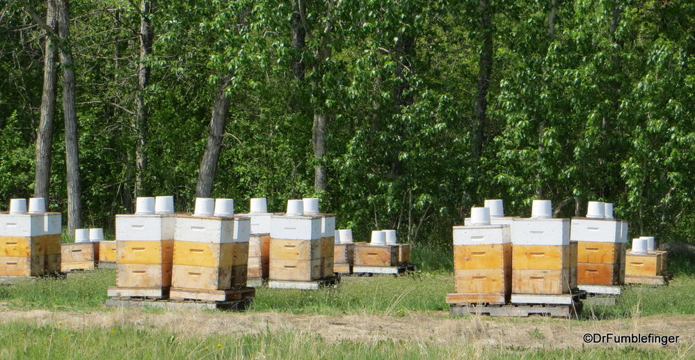 Beehives in the Swan Valley, Manitoba.  The upside down pail contains last year's honey to sustain the bees until more flowers are blooming