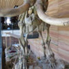 Never know when you'll run into a Mammoth.  This one at the Cheyenne, Wyoming Visitor Center