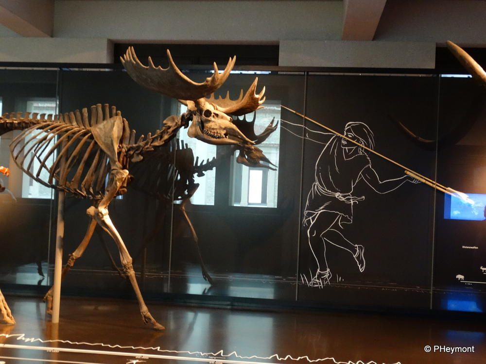 Early man meets Mammoth