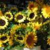 Sunflowers, Boulder Farmer's Market, Colorado