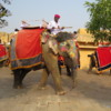Take an elephant ride to the Amber Fort, Jaipur