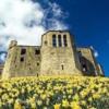 Warkworth Castle, Northumberland, Spring