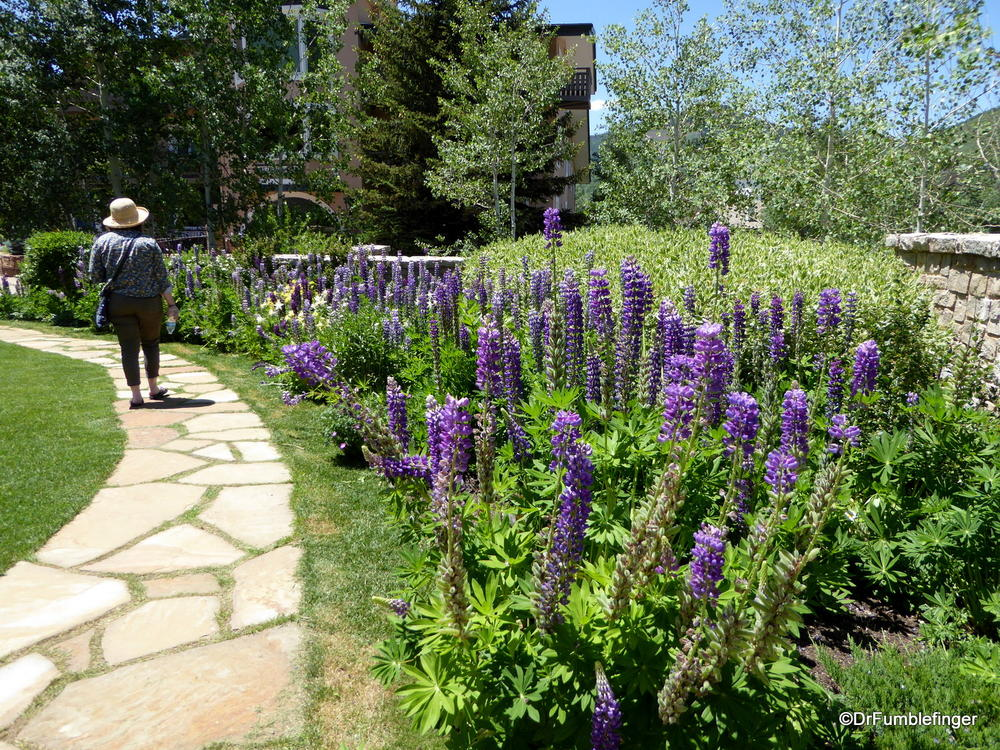 The lupine and columbine are in full bloom in Vail