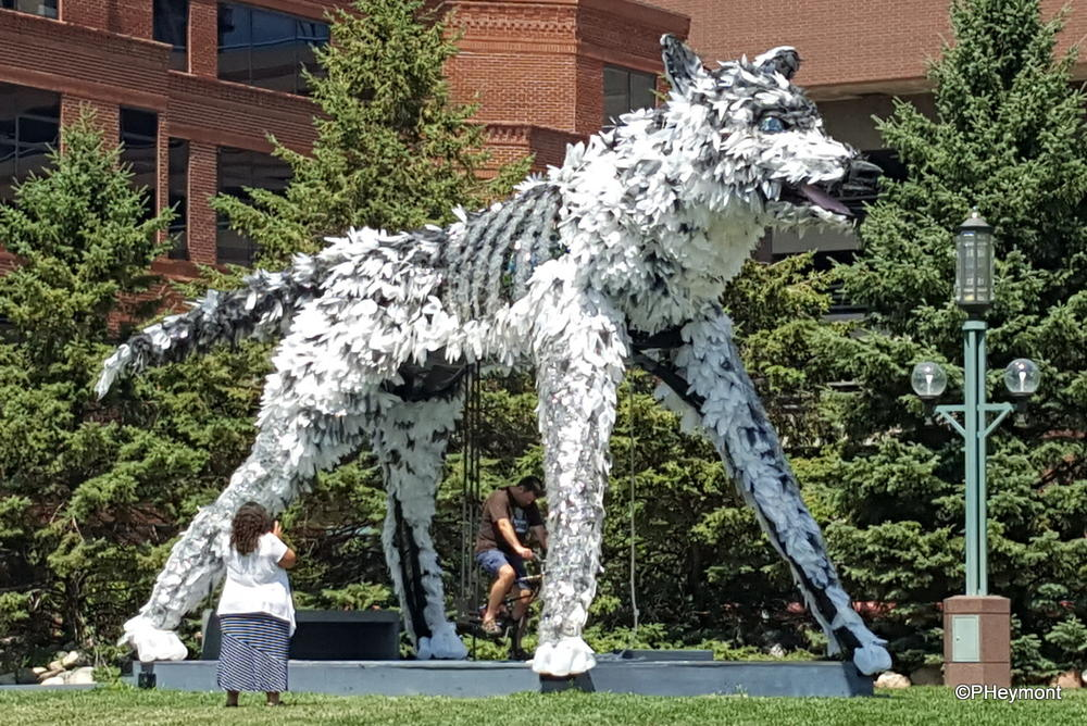 Wolf (Moose and Wolf), Minneapolis