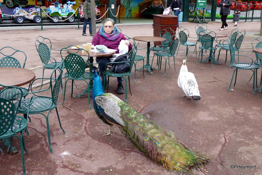 Unusual cafe visitor!