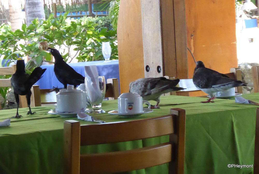Bold Birds at Breakfast