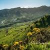 Farming terraces near Teno, Tenerife, Canary Islands