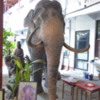 Stuffed tusker, Sri Jinaratana temple, Colombo