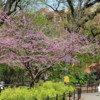 Spring Colors, Prospect Park, Brooklyn