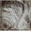 Collage of Fossils. Scremeston Northumberland.