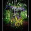 Wishing Well. The Alnwick Garden Northumberland.