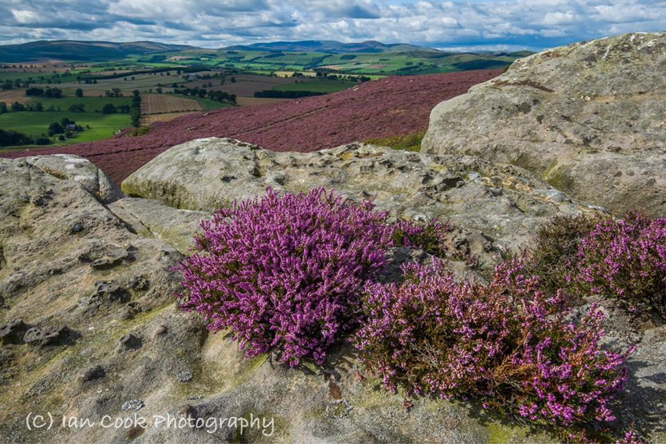 The Cheviots Northumberland. From the Crags near Hobs Mill, Thrunton Woods.