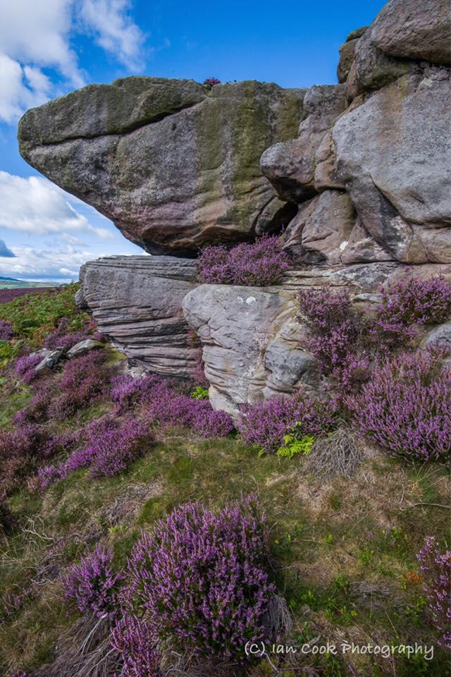 Weathered Crags and Heather, Thrunton Woods, Northumberland