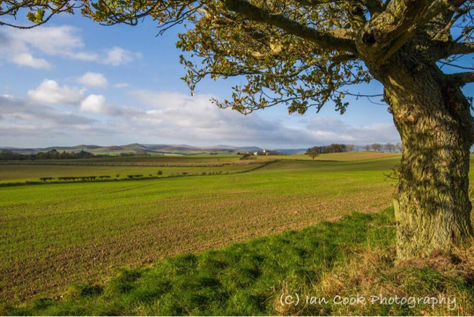 A green & pleasant land. Looking west past Crawley Tower, Northumberland, towards the Cheviots.