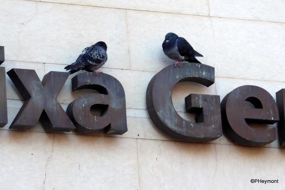 A bank for birds, Lisbon