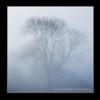 Misty Blue. Reeth Swaledale North Yorkshire.