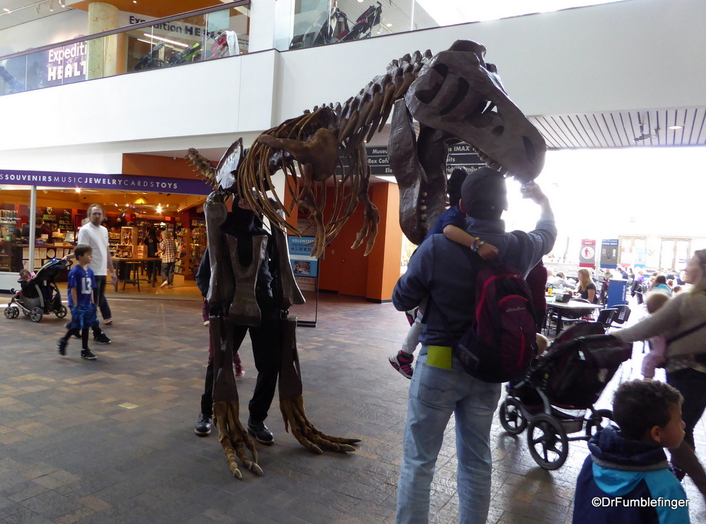 Walking T Rex, Denver Museum of Nature and Science
