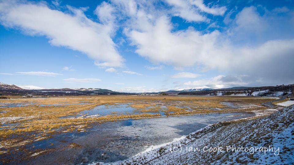 Insh Marshes, Scotland
