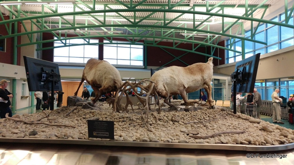 Most unusual baggage claim art ever?  Dueling caribou, Whitehorse Airport