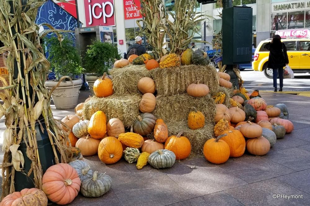 Urban Pumpkin Patch, NYC