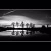 Tree line. Hedgley, Northumberland.