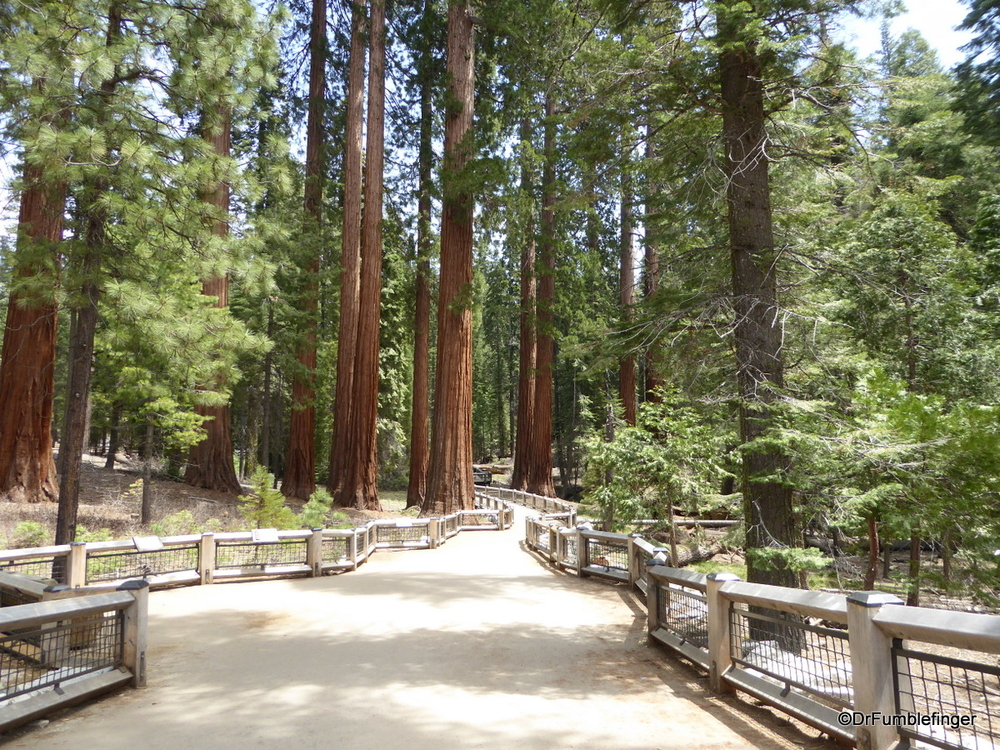 Mariposa Grove of Sequoias, Yosemite National Park