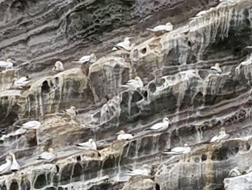 Birds on a Wall, Shetland