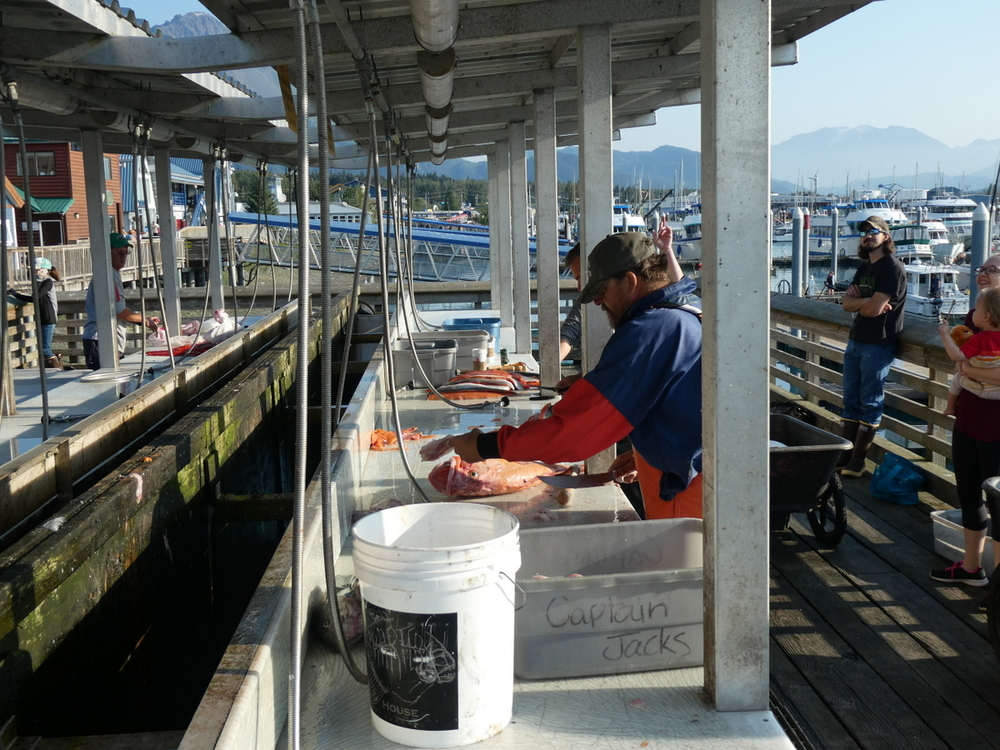 Commercial fishermen cleaning their catch, Seward Harbor