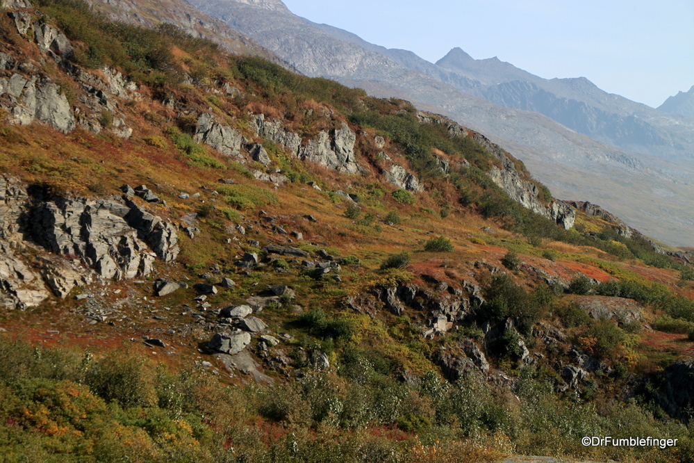 Fall Colors in the tundra of Thompson Pass